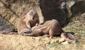 Hörnchen Massage