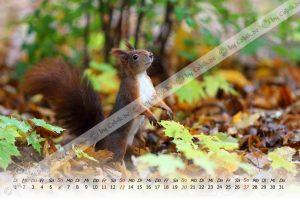 Eichhörnchen Klaender 2020