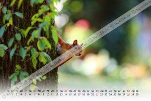 Eichhörnchen Kalender 2020