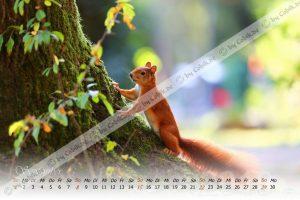 Eichhörnchen Kalender