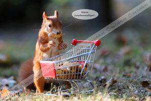 Eichhörnchen Bilderbuch