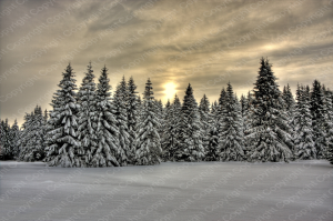 Poster Winterlandschaft