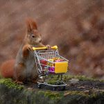 Eichhörnchen Poster