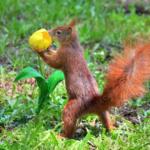 Eichhörnchen mit Blume