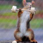 Eichhörnchen als Gewichtheber