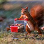 Eichhörnchen schiebt Einkaufswagen