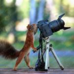 Eichhörnchen als Fotograf